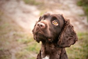 Dog in UK by brijome