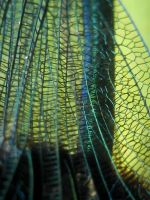 Banded Demoiselle Damselfly wing by iriscup