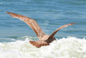 Bird in flight 3 by ArtieWallace