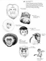 Oz: monkey sample faces by silentsketcher