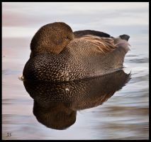 Different Duck by JS2010
