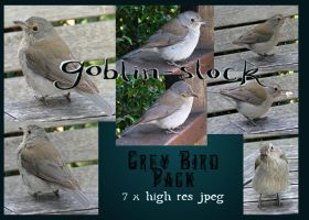 Grey Bird Pack by GoblinStock