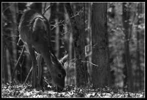 White-Tailed Deer by MariusStormcrow