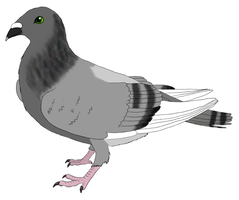 percy pigeon by moonlightartistry