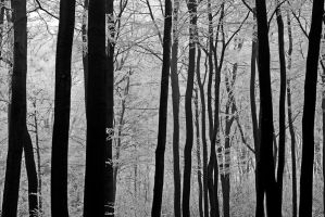 dark wood by augenweide
