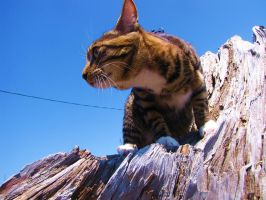 Muffy the young rock-climber by LittlePackage
