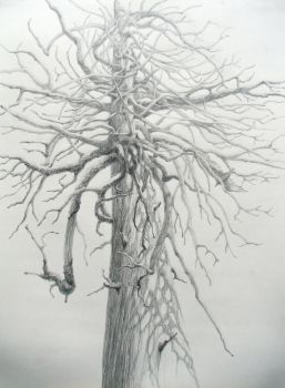 Tree1, Afterlife by Caddisman