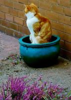 Repotted...... by TriciaS