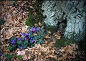 Beauty of an early spring by eswendel