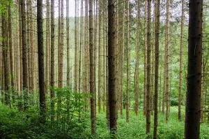 Forest by roarbinson