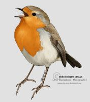 European robin by namu-the-orca