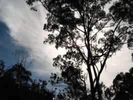Clouds and Tree by Pianochick66