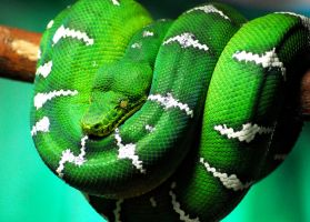 Coiled Emerald by WhyIsMyKittyAButt