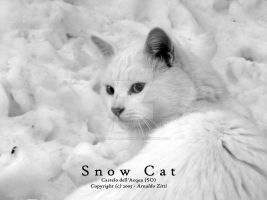 Snow Cat by Arnaldo-aka-Homer