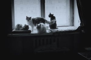 my cats by CRUELGERM