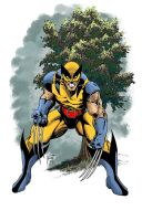 Classic Wolverine by KenHunt