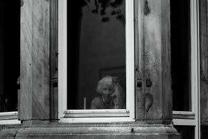 My life through the window by Addran
