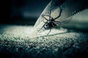Black Widow Spider by Nathan-Ruby