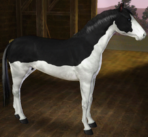 Sims 3 Horse Marking Download: SplashWhite1 by Isolated-Design