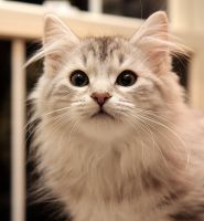 Kitten Portrait no. 1 by Mischi3vo