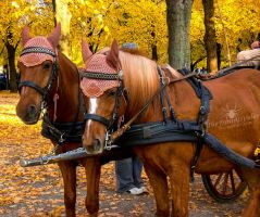 Brown Carriage Horses by TheFunnySpider