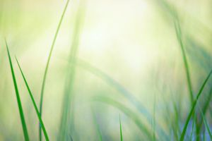 grass 5 by jagerion