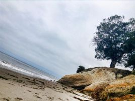 Lone Tree by BrookePricer