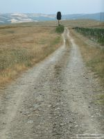 Nature Montalcino -  country dirt road by cfs3creative