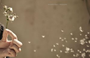 wishes fly away by SamanthaRoseCPhoto