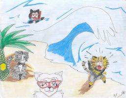 Cats at the beach by musicals