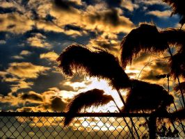 Silhouette and Sky HDR by OneofakindKnight