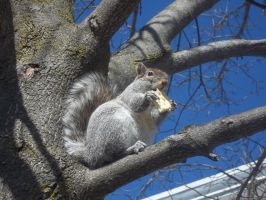 Hungry squirrel by xana-1