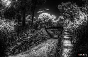 The White Garden by bamboomix