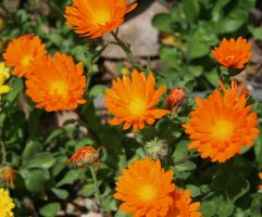orange little flowers by ingeline-art