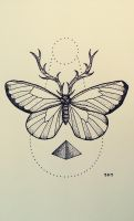 Butterfly by Aephylis