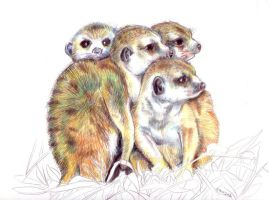 A huddle of Meerkats by staticgirl