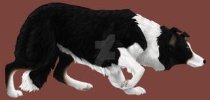 Northern California Border Collie Rescue  Adoptio by DragonsFlameMagic