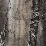 roots by EvaShoots
