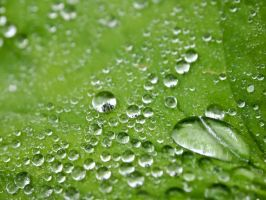 Raindrops on a leaf... by FreckledMoon