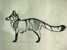 no name fox by Jupiter-Foxclaw