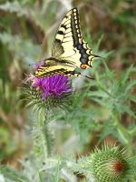 Butterfly... by d0bRinCho