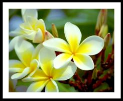 Yellow Flowers by otep