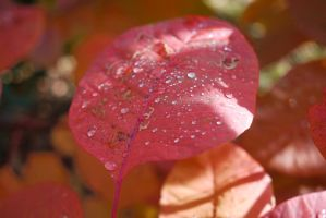 Autumn Leaf with Droplets by DancingCorgi