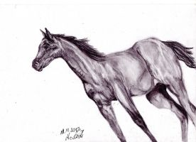 Quter Horse by LadyWera
