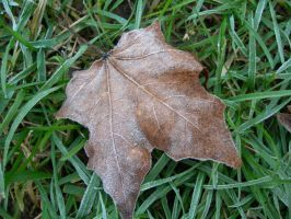 Frost on a Leaf by crotafang