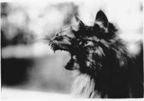 The Two Sides of a Cat by Sylviaizzle