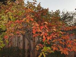 tree in my backyard by voider00