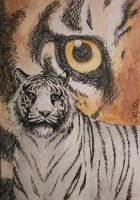 Stealing the Spotlight -ACEO- by silverybeast
