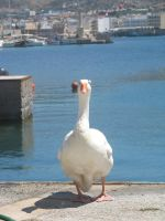 Greek goose) by NastasiaHands