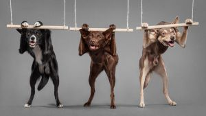 Canine athletes by Wordup
